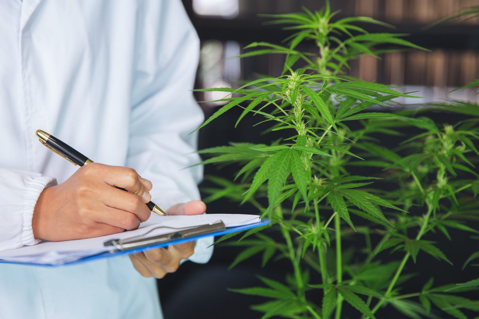 Technical Writing And Establishment of Audit And Inspection Programs For Cannabis