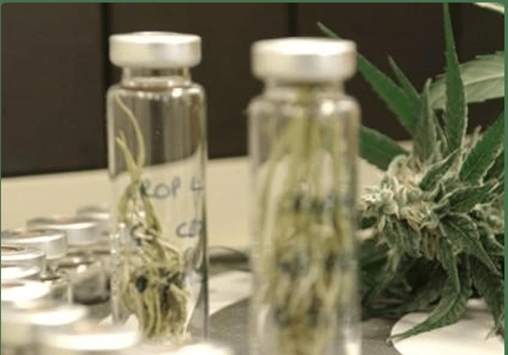 Quality Assurance For Cannabis
