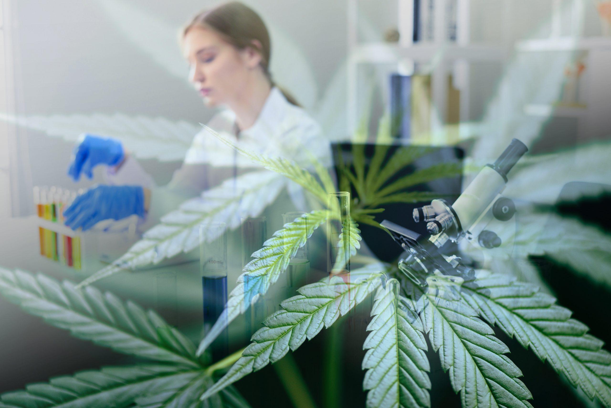 NACPT Cannabis Head of R&D: Cannabis Tissue Culture And Bio-Technology Formulation