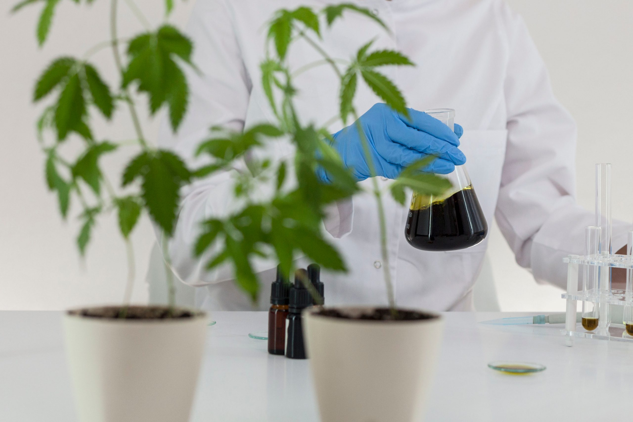 GMP and GPP for cannabis production