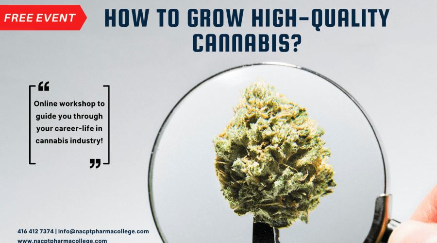 How to grow High Quality Cannabis